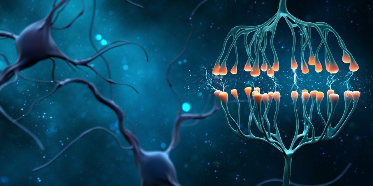 Botenstoffe: Synapsen- und Neuronenzellen senden elektrisch-chemische Signale.