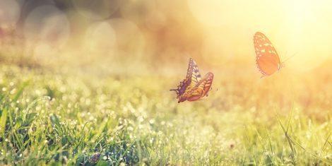 Schmetterlinge im Sonnenlicht