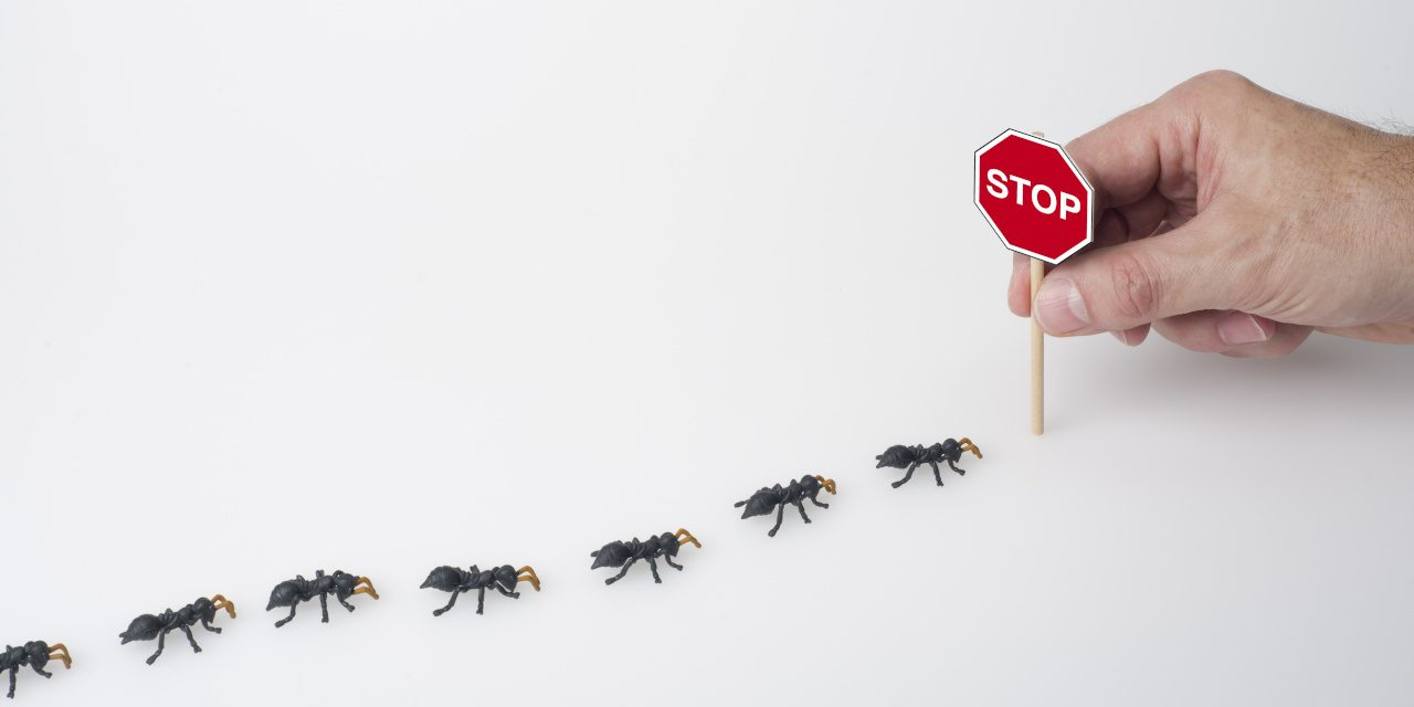 Schädlingsbekämpfung: Definition, Bekämpfungsmethoden und Vorbeugung