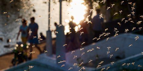Mückenschwarm in einem Park