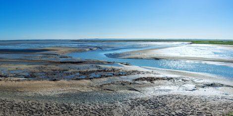 Der Prächtige Salzkäfer lebt nahe der Hochwasserlinie auf dem kahlen Klei