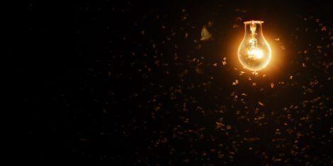 Motten kreisen um eine Lampe