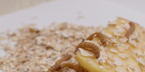 Mehlwürmer auf Haferflocken und einem Stück Kartoffel