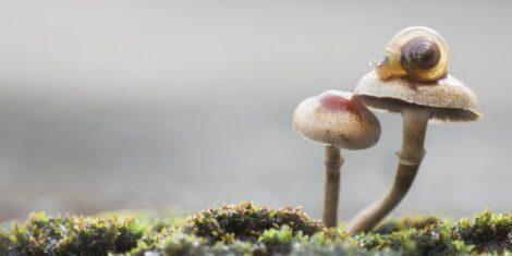 Schnecke auf einem Pilz